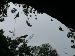 At dusk, hundreds of bats left the cave in search for food.