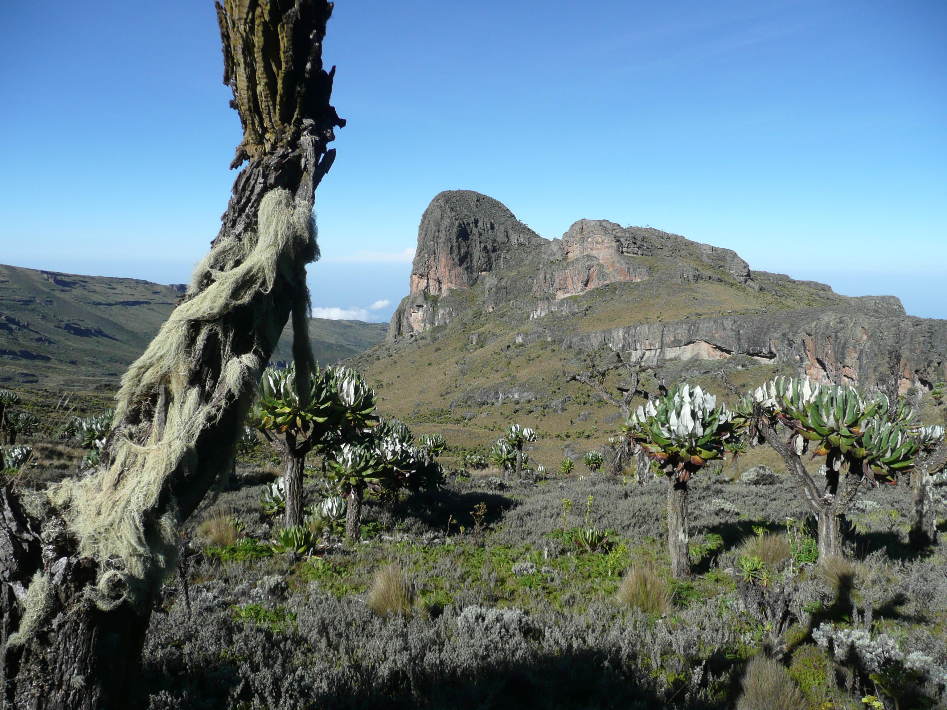 Jackson Summit, one of the many subsidiary peaks on Mount Elgon.