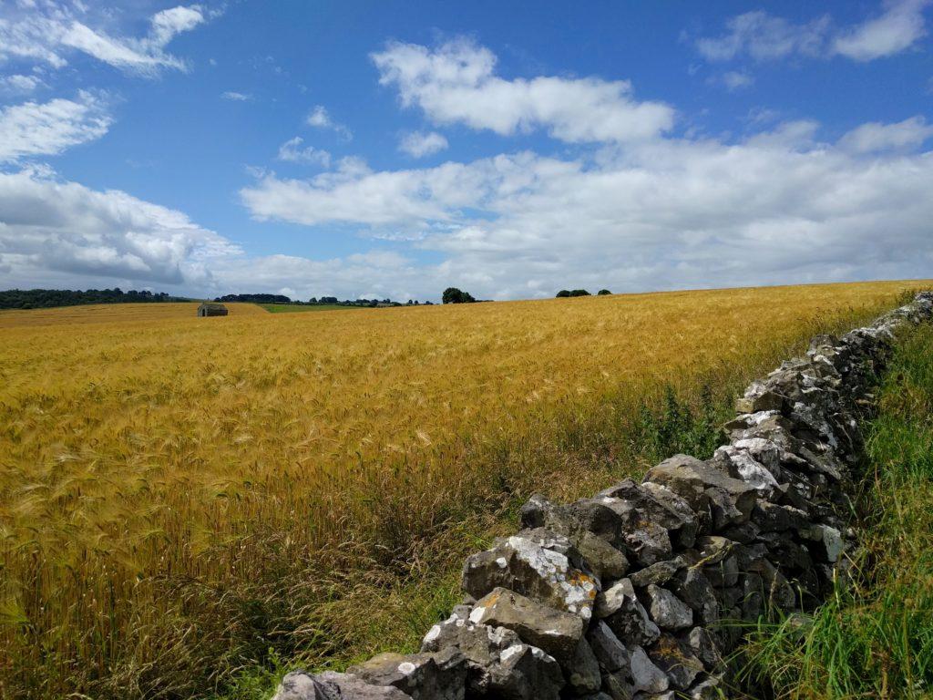 Beautiful fields in the Peak District.