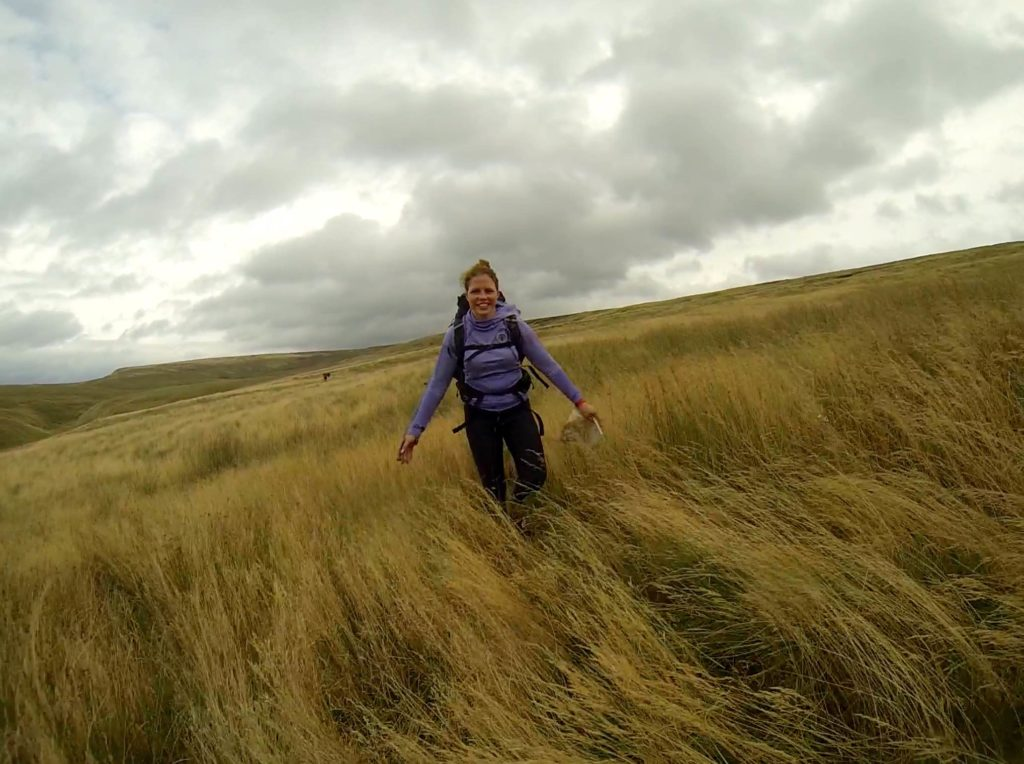 More epically high grass in the wind...