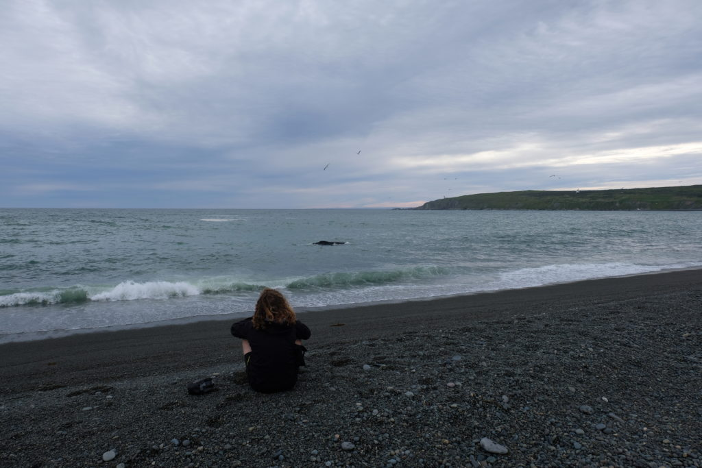 Sitting and watching the whales in the bay
